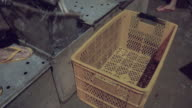 Transfer of live fishes from metal fishing boxes to plastic crates using a hand net video