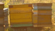 Transportable yellow beehives in marshland video
