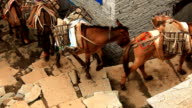 Transportation of freights on mules. video