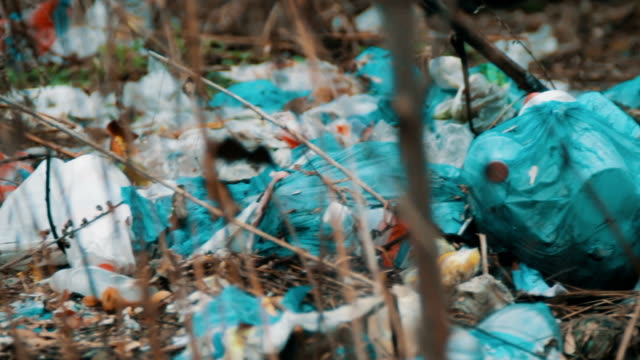 Trash on the dump video