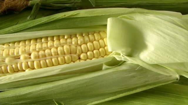 Travel on corn cob. recorrido sobre mazorca de maiz video
