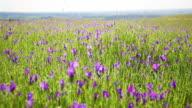 Travel through a meadow video