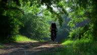 Traveler riding mountain bike through the forest video