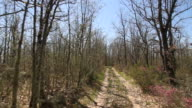 Traveling in quad bike by a forest path video