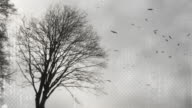 tree and birds HD video