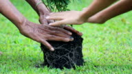 Tree and generation hands video