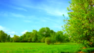Tree and meadow video