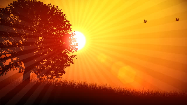 Tree and Sun Background 01 HD video