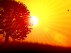 Tree and Sun Background 01 NTSC video