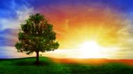 Tree and sunrise video