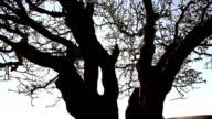 Tree at down,Shot motorized slider video