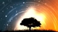 Tree at night / dawn video