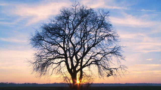 HD TIME-LAPSE: Tree At Sunset video