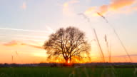 HD MOTION TIME-LAPSE: Tree At Sunset video