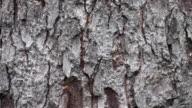 Tree bark video