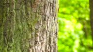 Tree bark-camera panning left video