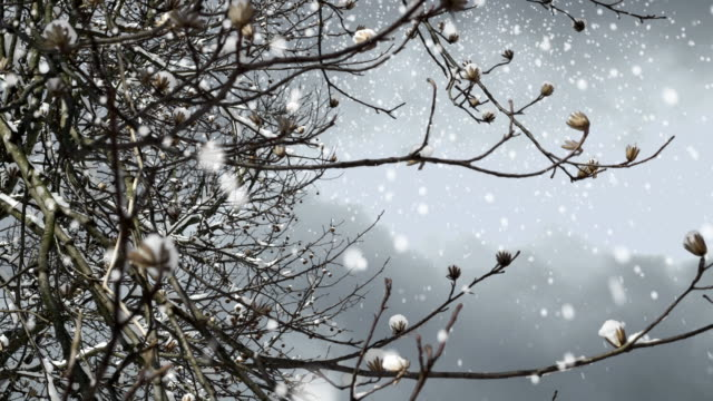 Tree Branch in a snowy day video