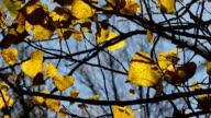 tree branches close up video