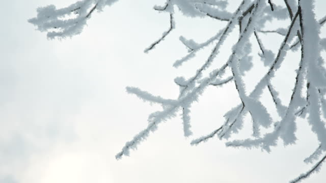 Tree branches in the snow video