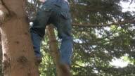 Tree climb video