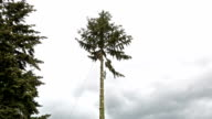 Tree Cutting video