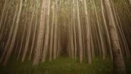 Tree Farm video