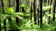 Tree Ferns video