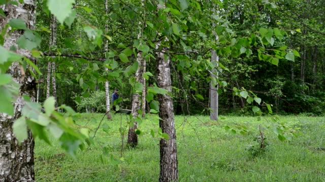 tree gardener firewood video
