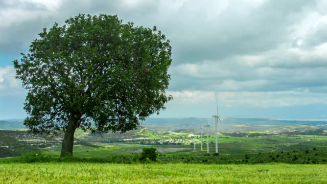 Tree growing on wind farm. Green energy. Environment protection, global video