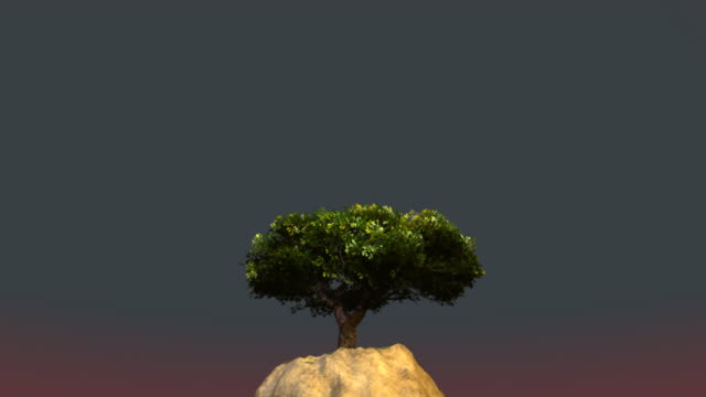 Tree grows on a cliff video