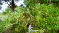 Tree hug green environmental business concept video