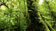 tree in deep tropical rainforest video