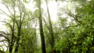 tree in deep tropical rainforest video