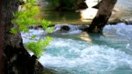 Tree in river. video