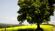 Tree in the Field video