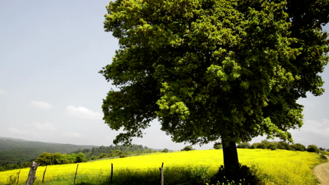 Tree in the Field video