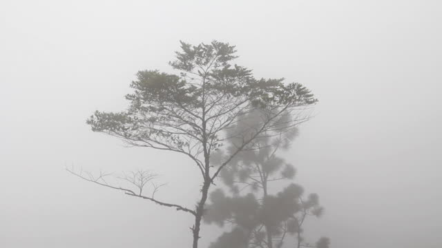 Tree in the mist. video