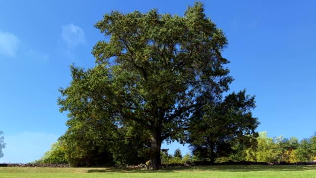 Tree in three seasons timelapse video