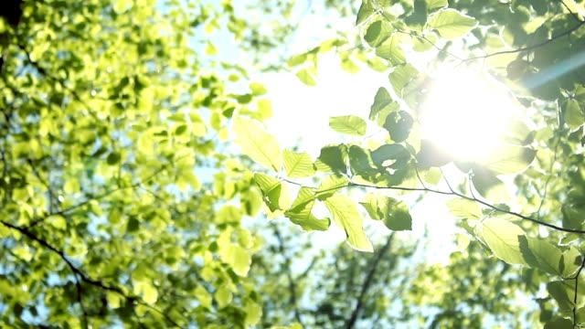 Tree leaves HD 1080 video