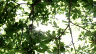 Tree leaves moved by wind in sunny summer day outdoor - HD video footage video