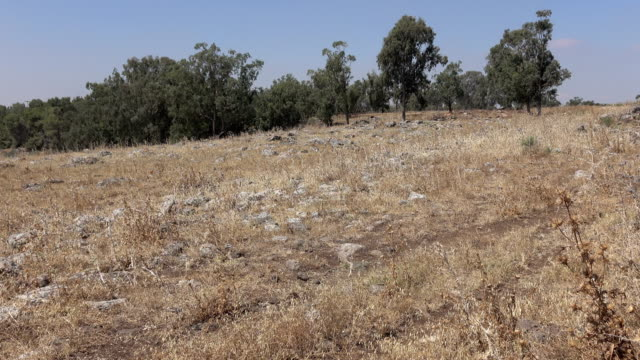 Tree Lined Field with Ancient Rubble of Roman Road video