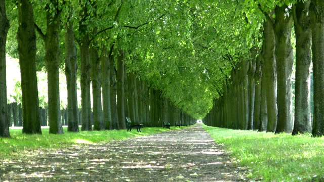 Tree Lined Park Hannover Germany video