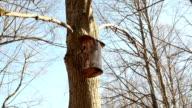 tree log nesting box video