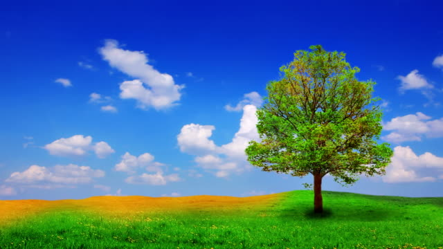 Tree, meadow and sky video