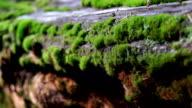 Tree moss video