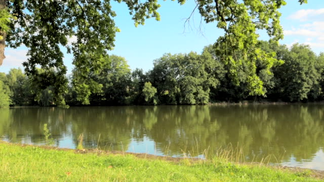 Tree next to the small rural pond video