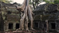 Tree on Top of Ruins at Ta Prohm Temple, Angkor, Siem Reap, Cambodia video