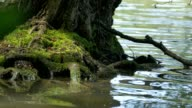Tree Root Washed by Waves video