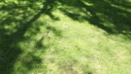 Tree shadow moving across lawn, timelapse video
