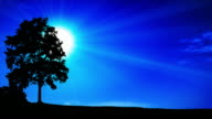 Tree silhouette with sun background video